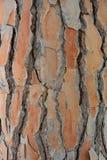 Corteza de un árbol conífero de una textura del pino foto de archivo libre de regalías
