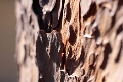 Corteza de un árbol de pino Imágenes de archivo libres de regalías