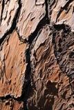 Corteza de un árbol de pino Imagenes de archivo