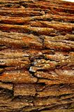 Corteza de un árbol de roble Imagenes de archivo