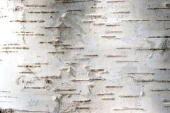 Corteza de un abedul Fotos de archivo