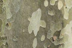 Corteza del árbol Foto de archivo libre de regalías