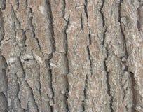 Corteza del árbol Imagenes de archivo