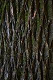 Corteza del árbol Fotos de archivo