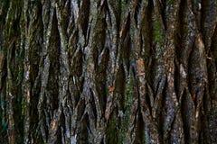 Corteza del árbol Fotografía de archivo libre de regalías