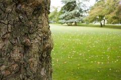 Corteza del árbol Imagen de archivo