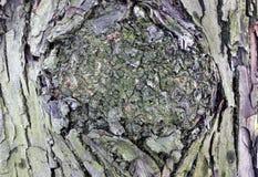 Corteza del árbol Fotografía de archivo