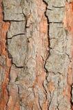 Corteza del árbol de pino Imagenes de archivo