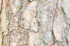 Corteza del árbol de pino, fondo de la textura Foto de archivo