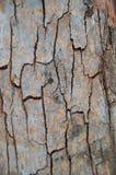 Corteza del árbol nativo australiano Imagen de archivo libre de regalías