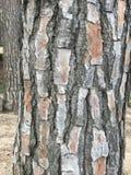Corteza del bosque Imagen de archivo