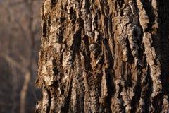 Corteza del cierre del árbol para arriba foto de archivo
