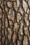 Corteza del cierre del árbol de pino para arriba Foto de archivo
