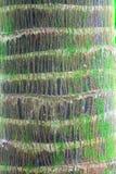 Corteza del detalle del tronco de la palmera Imagen de archivo