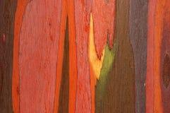 Corteza del eucalipto Imagen de archivo libre de regalías
