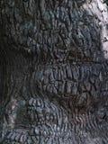 Corteza del fondo del árbol Fotografía de archivo libre de regalías
