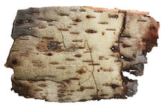 Corteza del fondo del abedul. Fotos de archivo libres de regalías