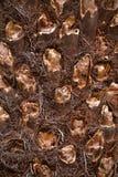 Corteza del helecho de árbol Fotos de archivo libres de regalías