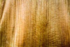 Corteza del modelo del árbol Imagen de archivo