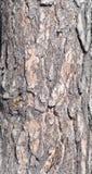 Corteza del pino Fotografía de archivo