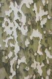 Corteza del árbol del sicómoro, modelo natural del camuflaje Foto de archivo