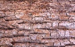 Corteza del roble comida por las larvas Fotos de archivo