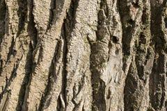 Corteza del tronco Foto de archivo libre de regalías