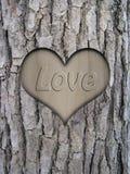 Corteza del tronco y corazón del amor Imagenes de archivo