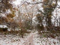 corteza desnuda de la naturaleza de la escena de las ramas de la trayectoria de bosque del país del invierno Imagenes de archivo