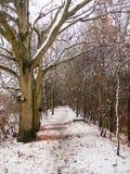 corteza desnuda de la naturaleza de la escena de las ramas de la trayectoria de bosque del país del invierno Foto de archivo