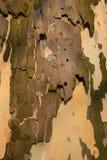 Corteza en vástago Imagen de archivo