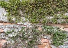 Corteza gris del árbol con la hierba verde Imágenes de archivo libres de regalías