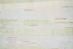Corteza ligera Fotografía de archivo