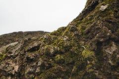 corteza macra de un árbol de los bonsais fotografía de archivo