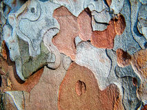 Corteza macro1 del pino Imagen de archivo libre de regalías