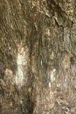 Corteza seca del árbol del primer del fondo texturizado tronco imágenes de archivo libres de regalías