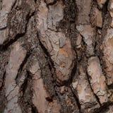 Corteza vieja del pino Imagenes de archivo