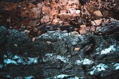 Corteza vieja seca de una textura natural del árbol de abedul Imágenes de archivo libres de regalías