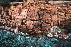 Corteza vieja seca de una textura natural del árbol de abedul Foto de archivo libre de regalías