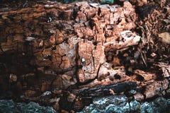 Corteza vieja seca de una textura natural del árbol de abedul Fotos de archivo libres de regalías