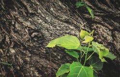 Corteza y hojas Fotografía de archivo