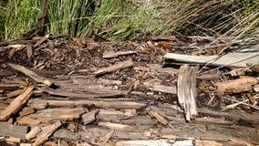 Corteza y madera del árbol Imagen de archivo