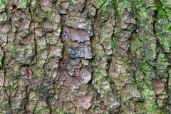 corteza y musgo de árbol foto de archivo libre de regalías