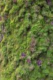 Corteza y musgo verde Fotos de archivo