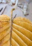 Corteza y otoño de abedul Imagen de archivo libre de regalías