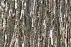 Cortezas de árbol Imagen de archivo libre de regalías