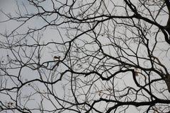 Cortezas de árbol que convergen en uno a Imagen de archivo