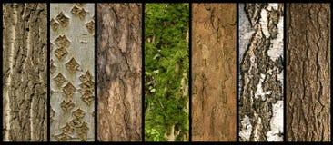 Cortezas de árboles Fotos de archivo libres de regalías