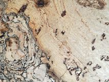 Cortical wallpaper. Surface of the cork wood Stock Photos
