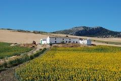Ferme avec des tournesols, Almargen, Espagne. Images libres de droits